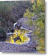 Whitetail Deer Mirrored Metal Print