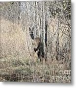 Whitetail Undercover Metal Print