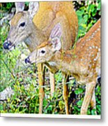 Whitetailed Deer Doe And Fawn Metal Print