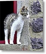 Who Goes There - Kitten Metal Print