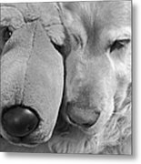 Who Has The Biggest Nose Golden Retriever Dog  Metal Print