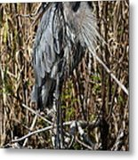 Who Is There - Great Blue Heron Metal Print