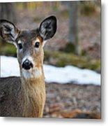 Who Is There Metal Print