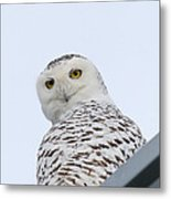 Who You Lookin' At? Metal Print