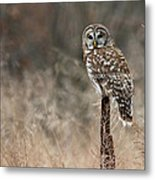 Whooo Goes There Metal Print