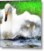 Whooper Swan Flutter Metal Print