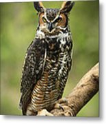 Whoos Watching Me Great Horned Owl In The Forest  Metal Print by Inspired Nature Photography Fine Art Photography