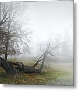 Who's Sorry Now Metal Print by Diana Angstadt