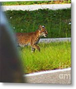 Why Did The Bobcat Cross The Road Metal Print