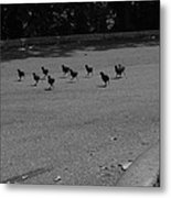 Why Did The Chicken Cross The Road Metal Print