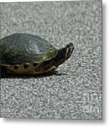 Why Did The Turtle Cross The Road Metal Print