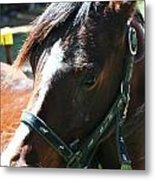 Why The Long Face Metal Print