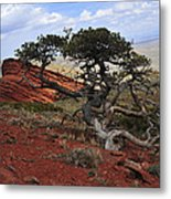 Wicked Tree And Red Rocks Metal Print by Roger Snyder
