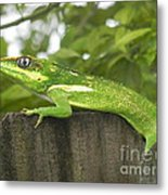 Wild About You Metal Print