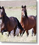 Wild And Free In The Field Metal Print
