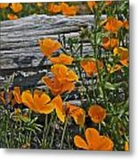 Wild And Woody Metal Print