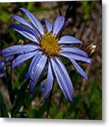 Wild Aster Flower Metal Print