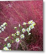 Wild Asters And Muhly Grass Metal Print