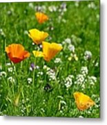 Poppies 3 - Wild At Heart Metal Print