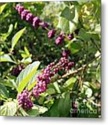 Wild Beautyberry Bush Metal Print