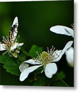Wild Berry Blossoms And Friend Metal Print