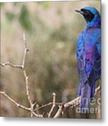 Wild Bird Metal Print
