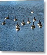 Wild Birds And Pond Metal Print