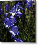 Wild Blue Bells Metal Print