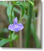 Wild Blue Orchid Metal Print