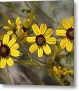 Wild Brittle Bush Flowers Metal Print