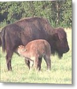 Wild Buffalo And Baby Metal Print by Rosalie Klidies