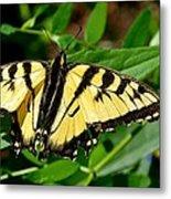 Wild Butterfly Metal Print
