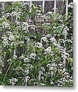 Wild Caraway And Old Fence Metal Print