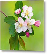 Wild Cherry Blossoms Metal Print