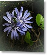 Wild Chickweed 2013 Metal Print