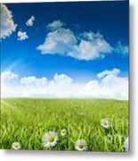 Wild Daisies In The Grass With A Blue Sky Metal Print
