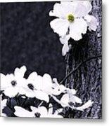 Wild Dogwood Blooms Metal Print