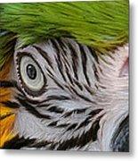 Wild Eyes - Parrot Metal Print