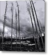 Wild Fire Aftermath In Black And White Metal Print