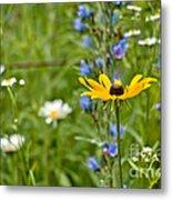 Wild Flower Delight Metal Print