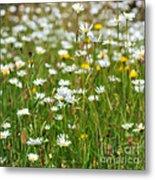 Wild Flower Meadow Metal Print