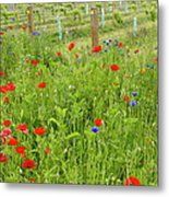 Wild Flowers Along The Edge Of A Metal Print
