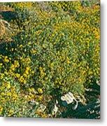 Wild Flowers, Anza Borrego Desert State Metal Print