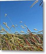 Wild Foxtail Grass In The Breeze II Metal Print