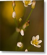 Wild Garlic Metal Print