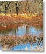 Wild Geese On The Farm Metal Print