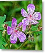 Wild Geranium On Trail To Swan Lake In Grand Teton National Park-wyoming Metal Print