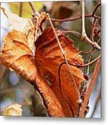 Wild Grapevine Leaf Metal Print