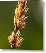 Wild Grass 2 Metal Print