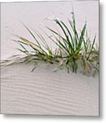 Wild Grass With Deep Roots 8x10 Metal Print by Michael Flood